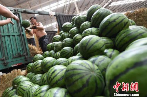 资料图:商贩忙着搬运西瓜。 武俊杰 摄