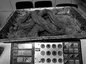 岳各庄海鲜市场,购一斤一两螃蟹,绳子占6两。