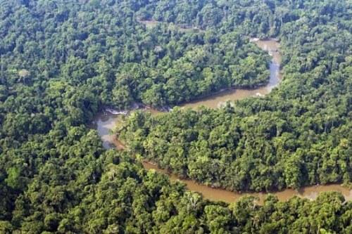 """树木被称为是""""地球之肺""""。图为资料图。"""