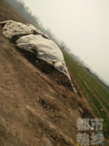 西安�邑区百亩地散恶。