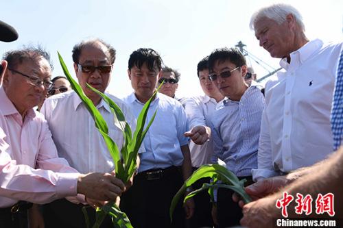 当地时间6月11日,中国智库专家代表团访问美国艾奥瓦州金伯利农场,并与农场主瑞克・金伯利(右一)探讨美国现代农业的发展状况、中美农业合作的未来方向。 中新社记者 刁海洋 摄