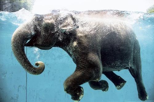 来源:动物园官网