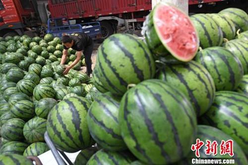 资料图:随着天气不断升温,解暑水果西瓜销售走俏。武俊杰 摄