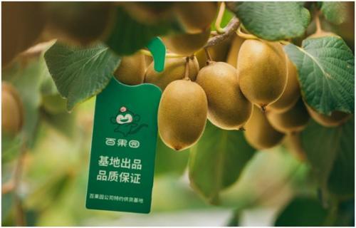 佳沛2019年首批奇异果将靠岸率先在百果园门店上市