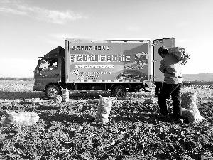"""内蒙古土豆产地_""""薯都""""土豆直供北京新发地 农药残留为零(图)- Micro Reading"""