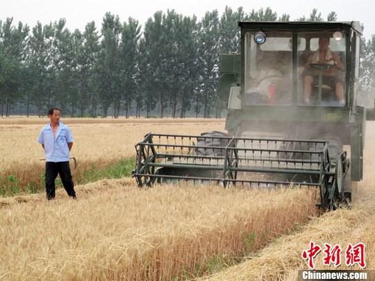 双重挤压致粮价严重倒挂库存攀升农民收益大幅下降