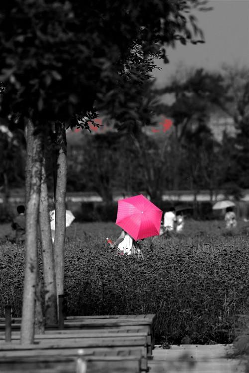 泡摄熏衣草情趣外拍记试用索尼A35(2)--中新女仆庄园动漫图片