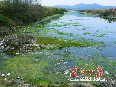根据环保厅数据,粤东诸河水质最差,惠莞深交界河流污染严重,河流