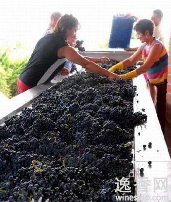葡萄酒酿制方法:如何避免自制葡萄酒器皿爆炸-中新网