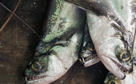 世界上13种最可怕的淡水动物公布
