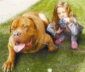 巴西獒犬_獒犬_法国獒犬