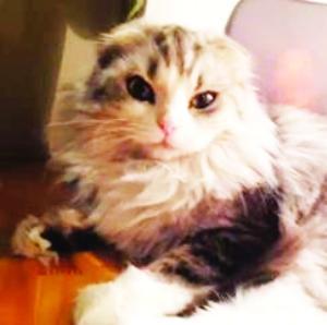 从视频里看,4只小猫咪各有特色,但是无一例外地呆萌可爱,它们用慵懒的