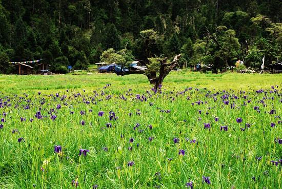 米林县南伊沟是西藏著名的风景区,珞巴族姑娘娅米就出生在这个美丽的