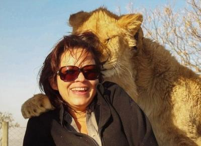 南非禁猎区狮子拥抱游客被拍(图)图片