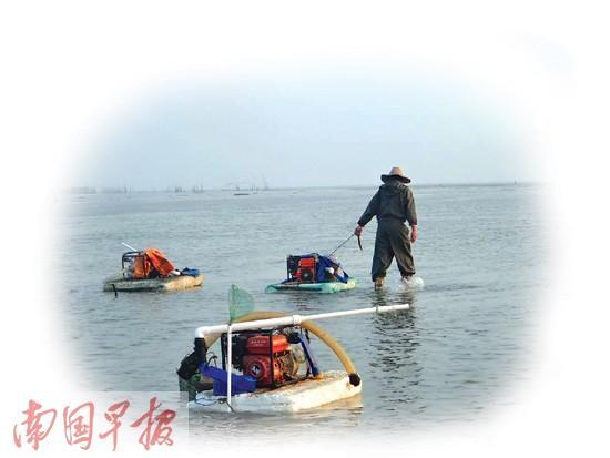 广西北海有人用高压水枪冲击滩涂 沙虫遭毁灭挖掘
