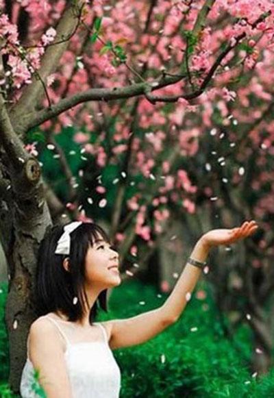 武汉武大:满城满是樱花雨