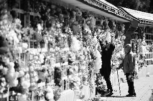 北京78万省墓市民创单日新高 义冢赠予黄白菊花