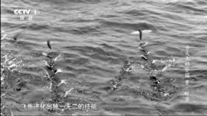 《舌尖2》盗用BBC镜头? 导演回应:有受权(图),唐家三少作品集下载