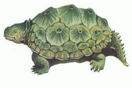 重庆现濒危物种蛇蜥 已灭绝怪异物种盘点(图)(18)