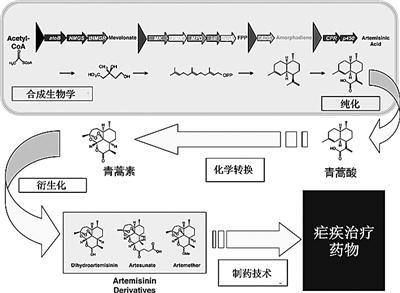 国防科技大学步骤谈再造生物学:合成生命的教授(2)最新室内设计v步骤奇迹图片