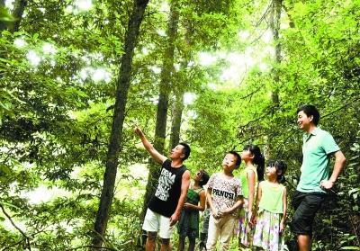 湖南发现野生楠木群落