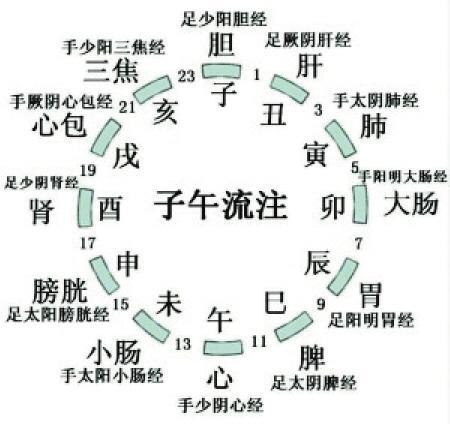 古人又根据十二生肖动物的出没时间,将一天划分为十二个时辰,每个时辰
