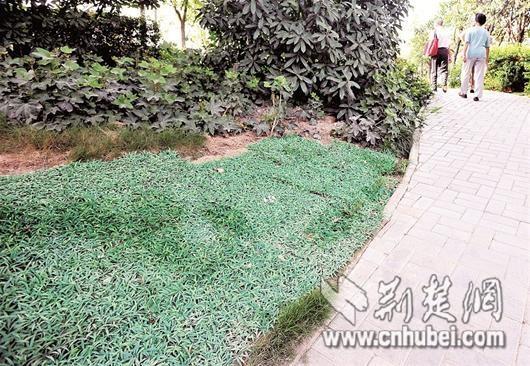 武汉绿化带里铺塑料草皮 疑为形象工程遭质疑(图)