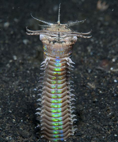 盘点十大最怪异海洋生物