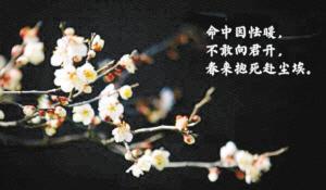 """南大学光棍节_南京大学""""单身·三行诗""""走红有的诗仅有三个字-中新网"""