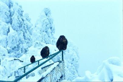 峨眉山 来一段冰雪奇缘