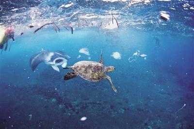 海洋垃圾危害多大?