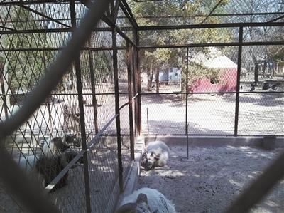 """新闻中心 文化新闻    上周五,银川中山公园动物园迎来了11位""""新客人"""""""