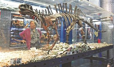 博物馆恐龙展柜被游客投币 动物标本皮毛被摸秃