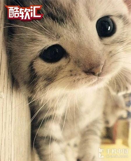 喵星人的光阴屋 被萌猫占据的游戏清点