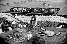 巨幅稻田画亮相沈阳:由彩色水稻组成