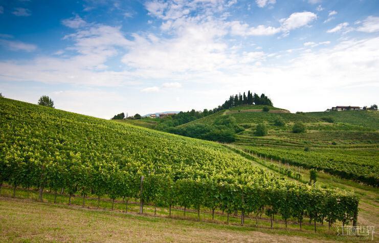弗留利-威尼斯-朱利亚,意大利白葡萄酒天堂