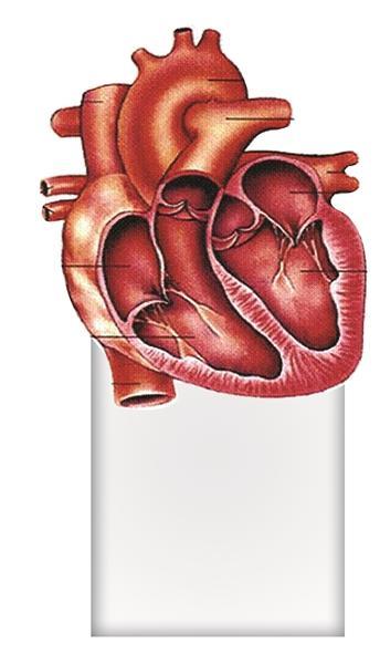 """孕检中发现动脉""""长反了"""" 宝宝要做""""心脏整形"""""""