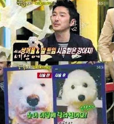 韓國藝人劉泰俊家中的寵物狗,做完整容手術前后的對比圖。