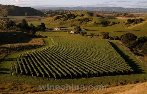 美国成新西兰葡萄酒最大出口商场