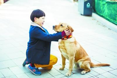 """真人秀动物火过明星 """"神犬小七""""形成产业链"""