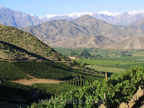 智利葡萄酒职业施行新策略应答全世界变迁