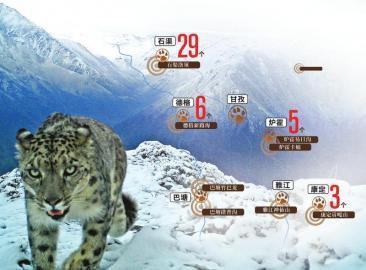 贡嘎山自然保护区曾拍到的雪豹。贡嘎山自然保护区供图雪豹调查点位示意图发现疑似雪豹粪便及刨坑数量制图姜宣凭
