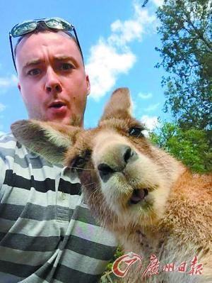 澳男子玩自拍 袋鼠成功抢镜摆出搞笑表情(图)