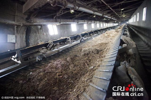 钞碎渣和秸秆一起被送上传送带,送到焚烧炉,从而走完它们的一生。图片来源:视觉中国
