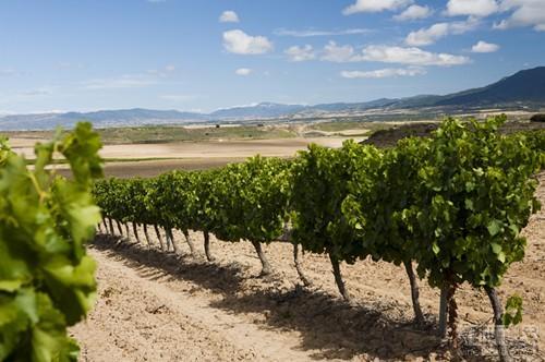 2016年值得一看的新兴葡萄酒产区
