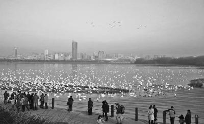 """新年三门峡郊区施行""""禁炮令""""新年蓝刷爆伴侣圈"""