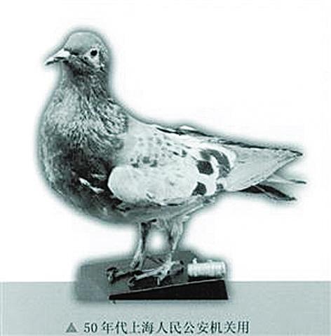 消逝的警鸽:新中国建立初期的安保功臣