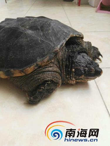 ... 买来鳄龟欲放生 专家:会破坏本地生态 - 中国日报网