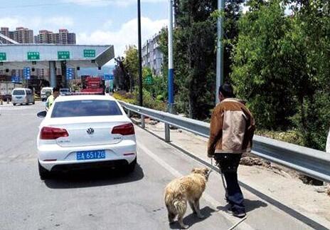 五旬老汉酒后上高速路遛狗 致大量车辆滞留(图)