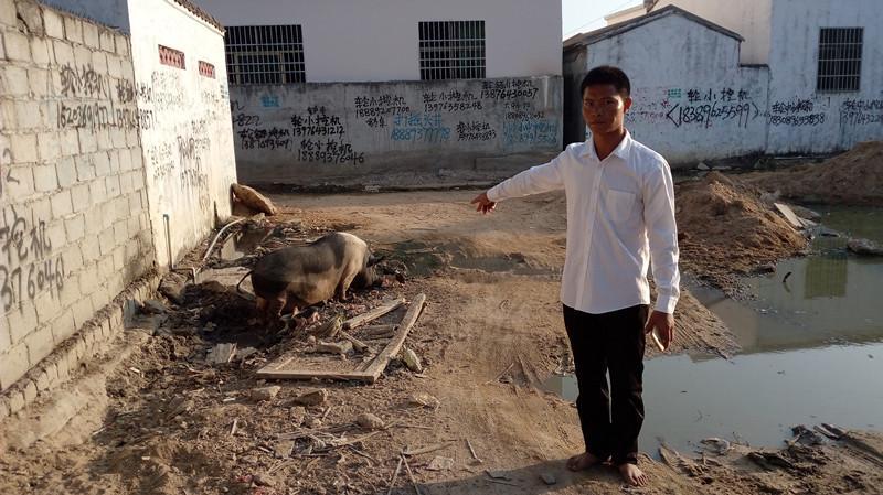 海南一4岁男童被母猪咬伤 后抢救无效死亡